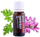 gladoil-geranium-illoolaj1s9-png