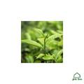 Jomtom Teafa Illóolaj Bio (Melaleuca Alternifolia)