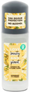 Love Beauty And Planet Ylang Ylang Deo Roll-On