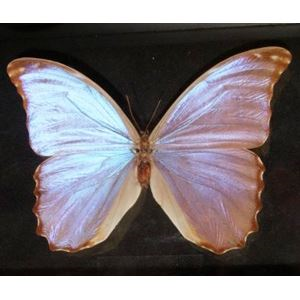 Bud Parfums Butterfly