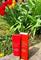 TIA'M My Signature Vita Red Sunscreen SPF50+ PA+++