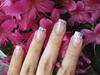 Pale Pink Shells