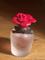 Félár alatt eredeti Dolce & Gabbana Rosa Excelsa E