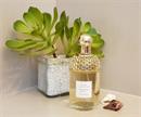 Guerlain Aqua Allegoria Mandarine Basilic 125 ml