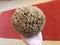 Cosmio Honeycomb Tengeri Szivacs