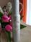 Fragonard Parfumeur Santal Edt 100 ml